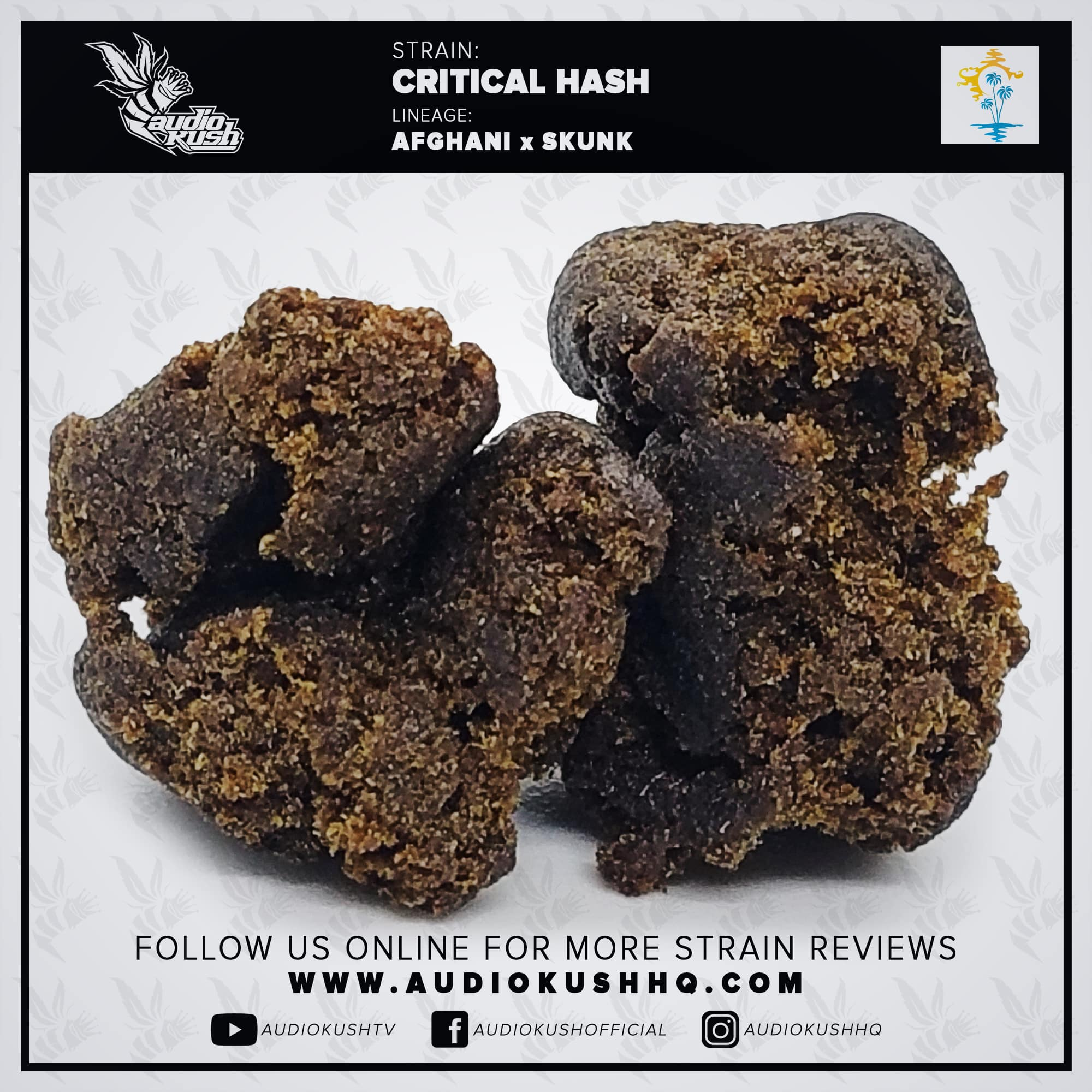 Strain Review, Critical Hash, Coffeeshop Blue Lagoon, Amsterdam