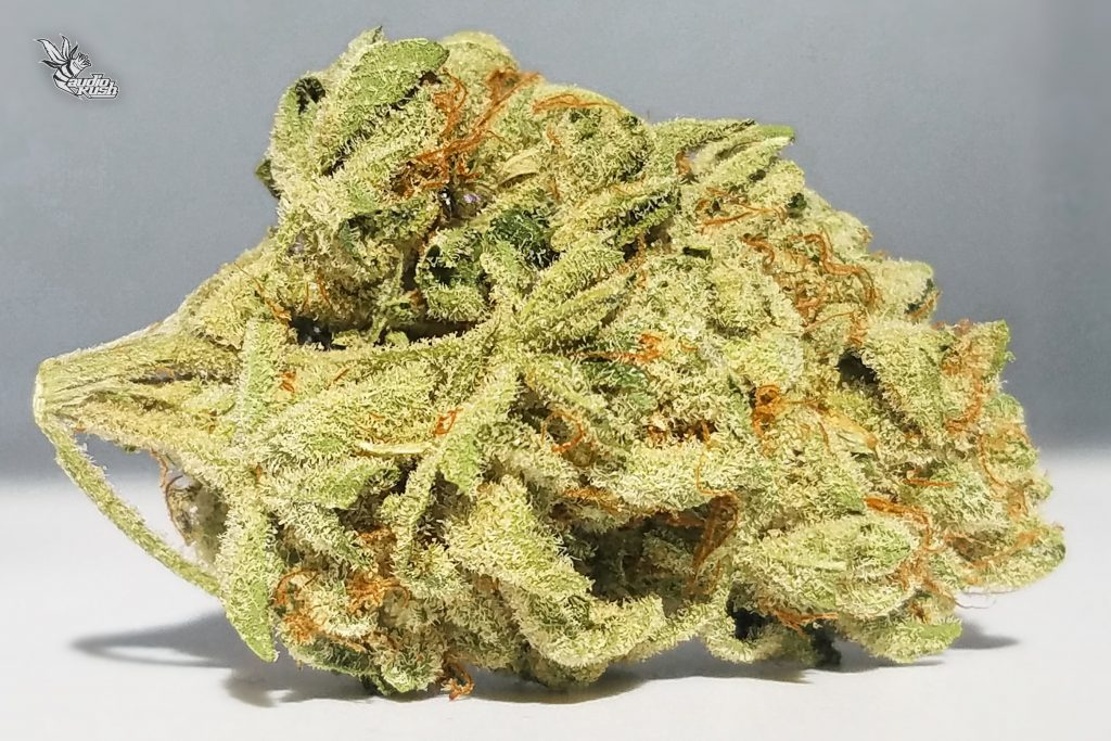 Testing at 24% THC, the hybrid strain Headband is perfect for both Sativa and Indica lovers.