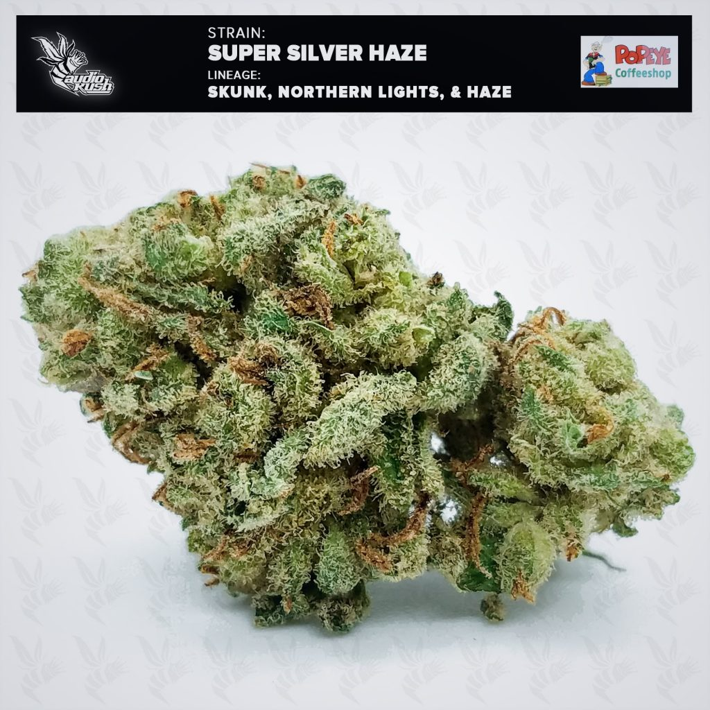 The strongest strain we tested at Coffeeshop Popeye was Super Silver Haze. Super Silver Haze's potency tested at 26%.