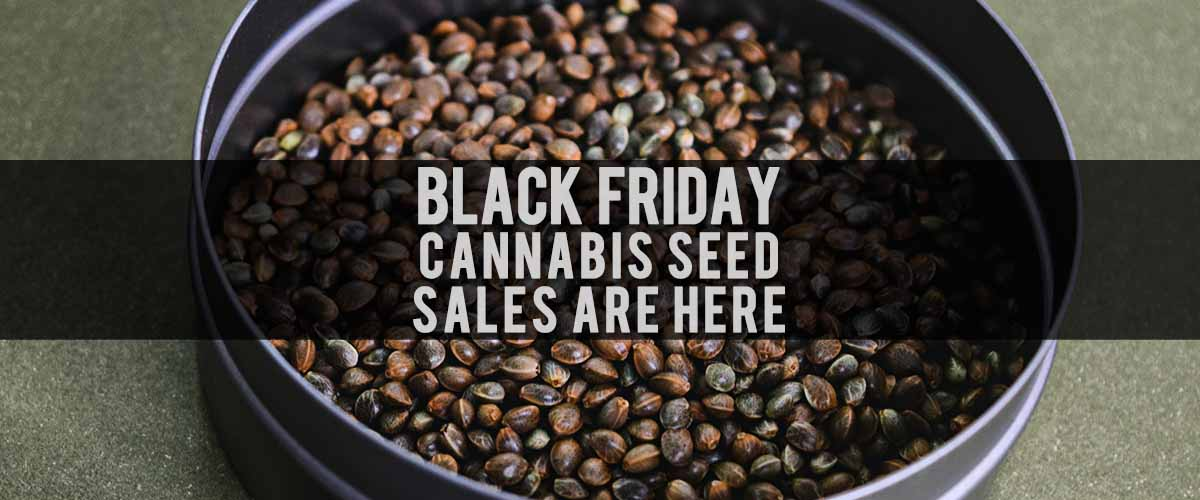 black friday cannabis seeds sale 2020